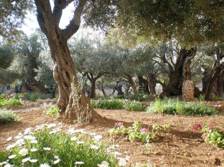Garden Of Gethsemane 2